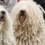 Top 10 Crufts Facts