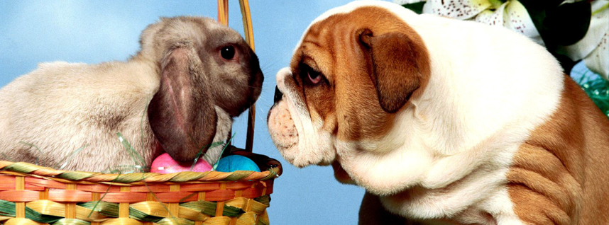 easter dangers for pets